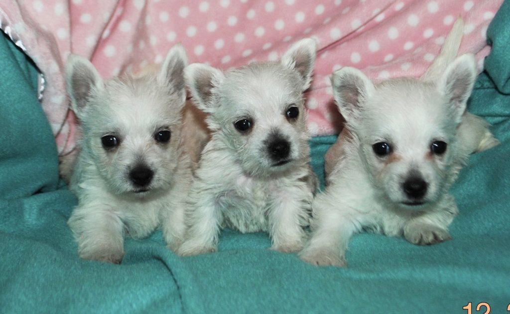 Pixie's 3 of 6 baby girls!