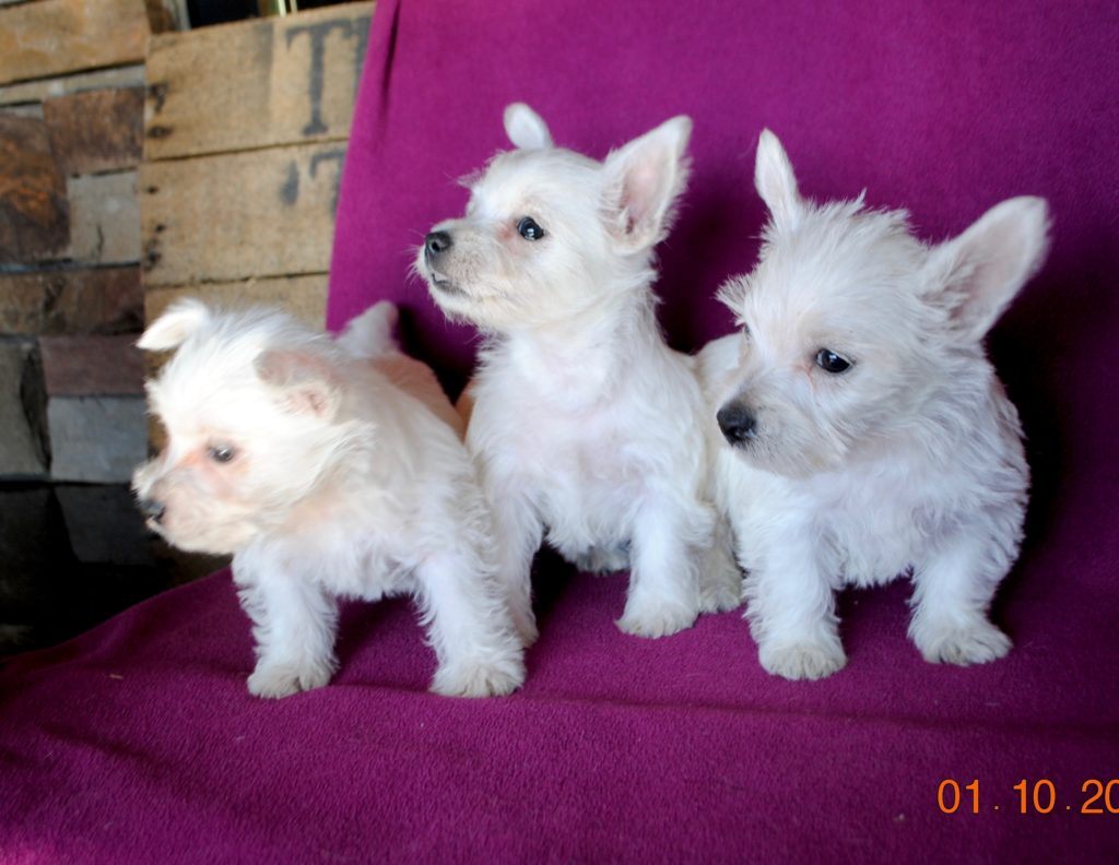 Pixie and Archies, at 7 weeks old.