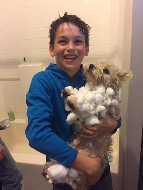 Marley, Ready for a bath after playing in the snow, and making snowballs!