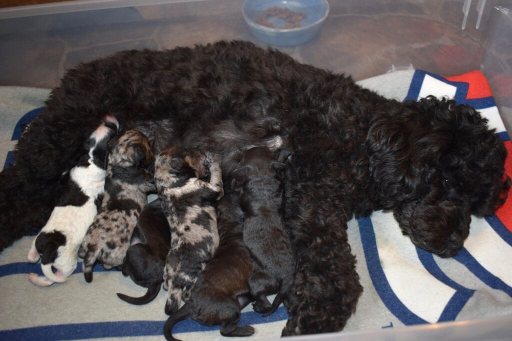 Eleanor, & minutes old puppies
