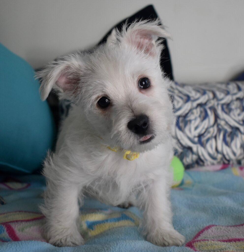 Jenna-Magnum boy, 9 weeks old.