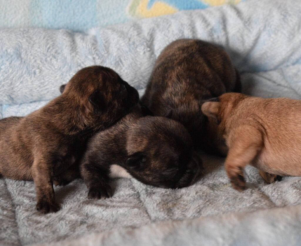 Verruca-Razz, boys 8 days old