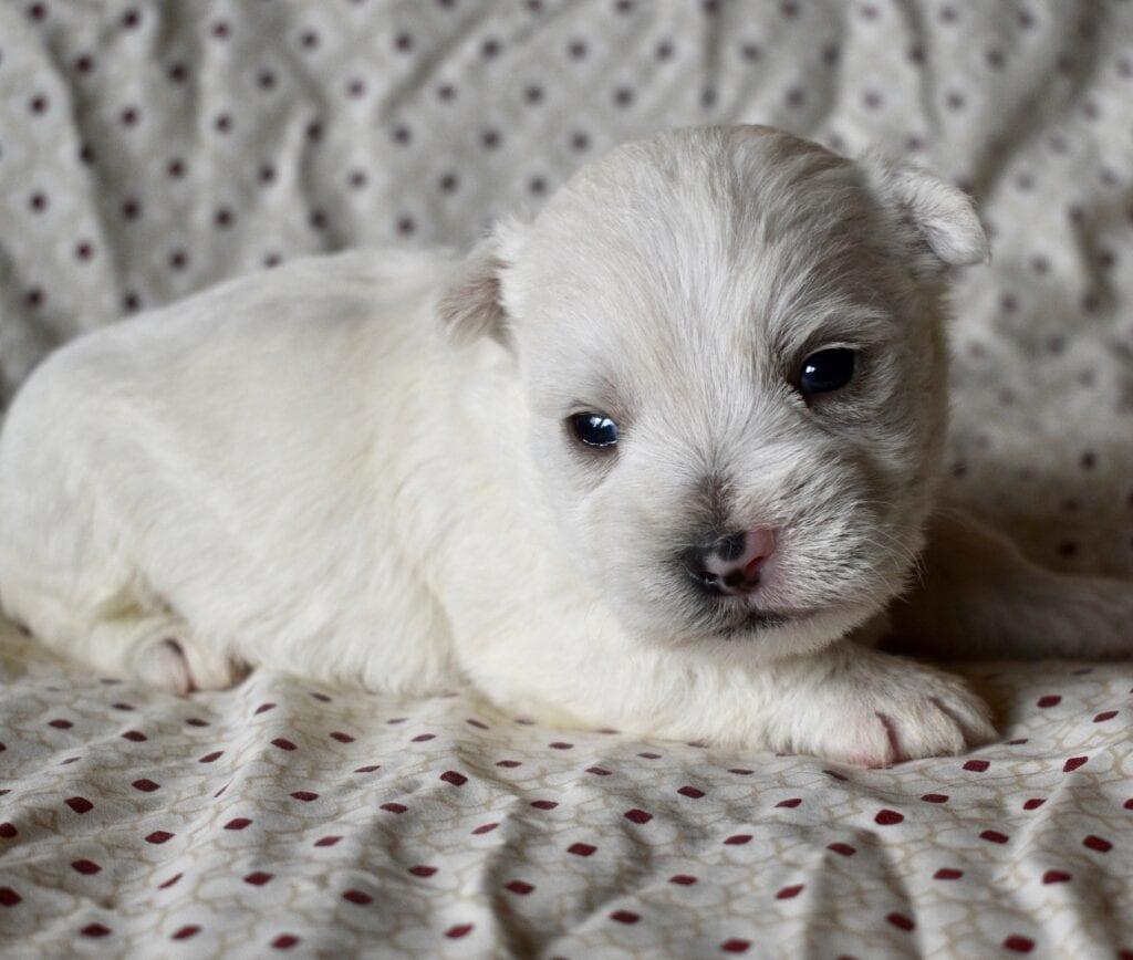 Brooke and Briggs boy, 3 weeks old
