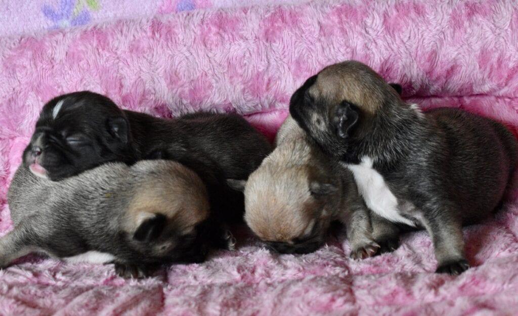 Verruca-Razz, girls 8 days old