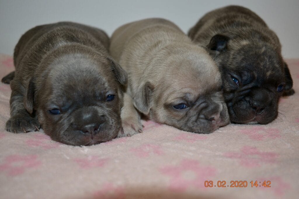 The girls, very brindle on right is spkoen for.