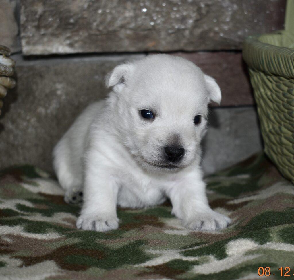 Boy 3 weeks